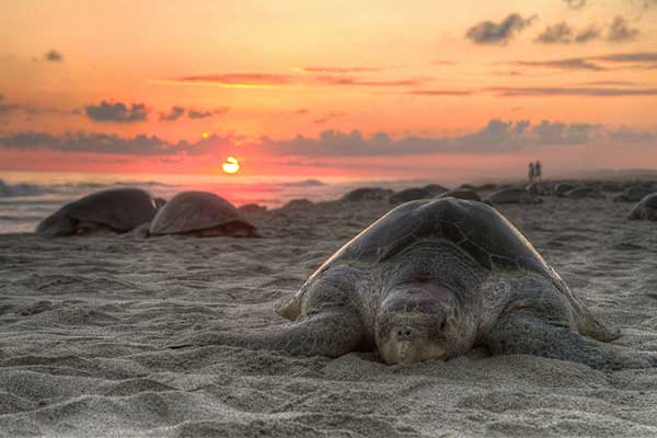 save our sea turtle