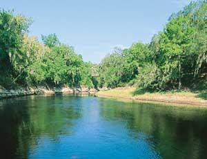 suwannee cougar women Talk:okefenokee swamp jump to  suwannee river: strange green land  fat-faced woman these,.